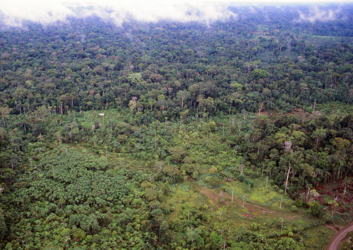 Rainforest deforestation