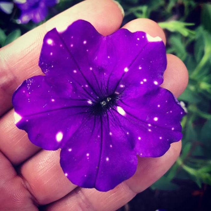 Foto: oahu_gardeners/Instagram