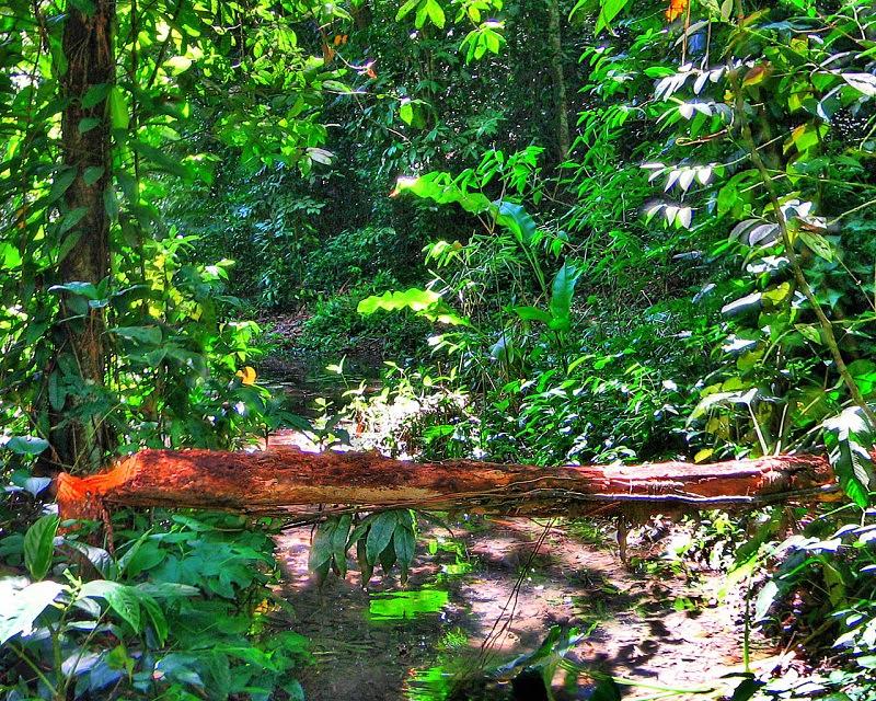 Terrenos localizados em área de proteção ambiental são vendidos na Grande São Paulo