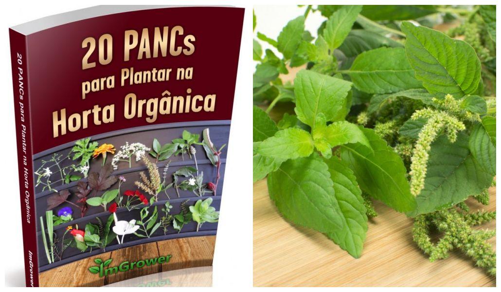 E-book gratuito ensina a plantar 20 PANCs na horta orgânica
