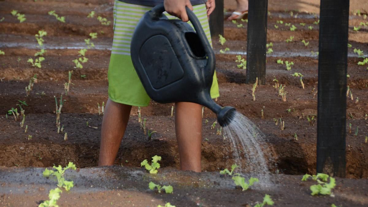 Palmas ganha horta urbana comunitária com mais de 7 mil m2