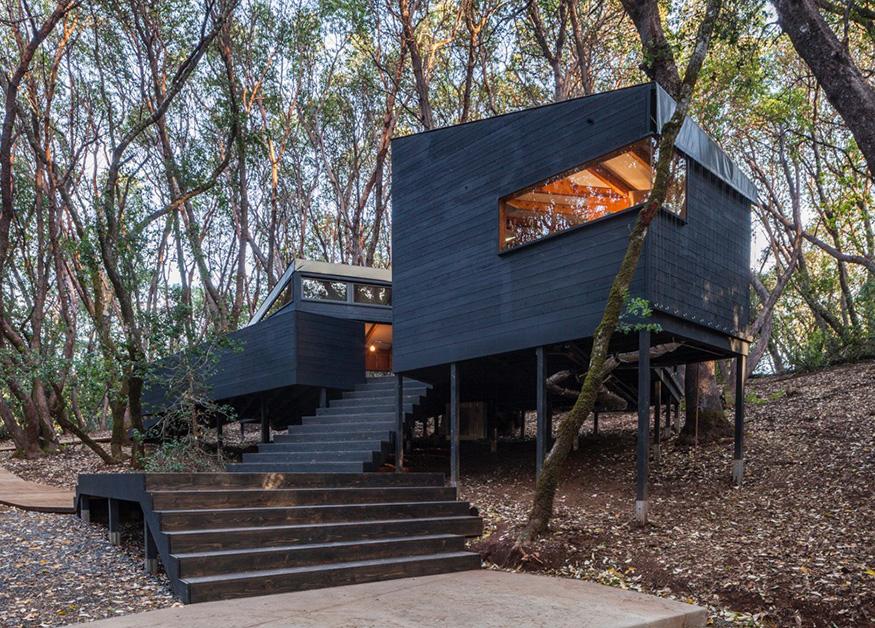 Casa na árvore é construída em meio a floresta californiana