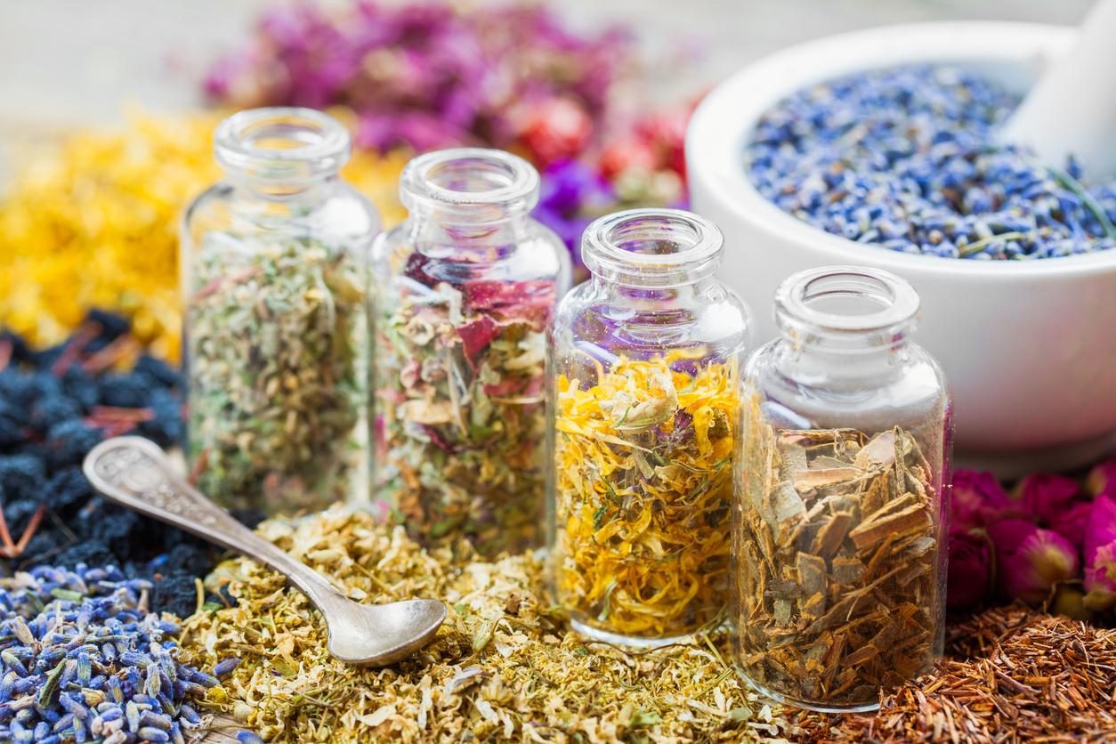 Uso caseiro de plantas medicinais é tema de curso em SP