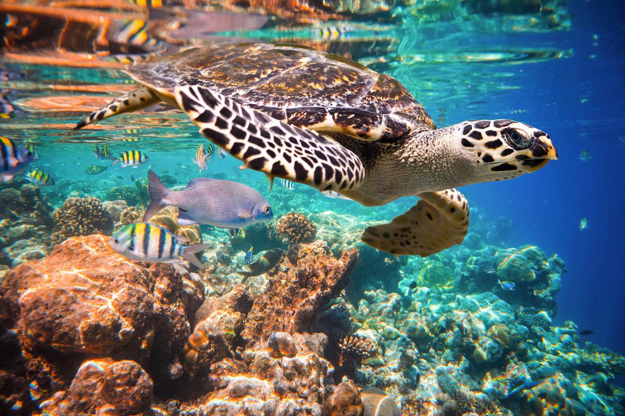 Lixo matou mais de mil tartarugas no litoral Norte de SP desde 2016