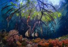 oceanos pulmão do mundo