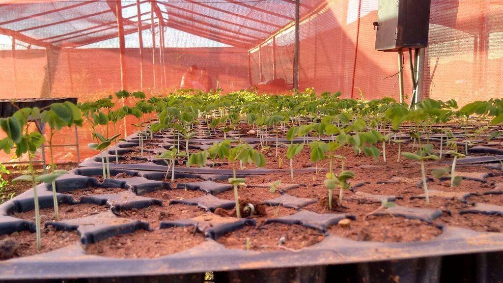 Mais de 30 mil mudas foram plantadas para reflorestar Alagoas
