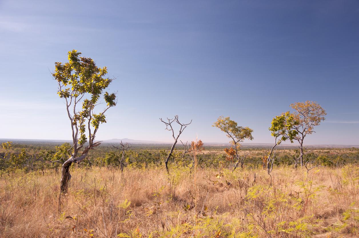 Em dois anos Cerrado perdeu equivalente a mais de três DF pelo desmatamento