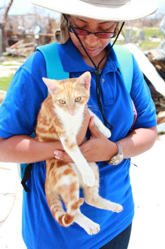 Foto: World Animal Protection