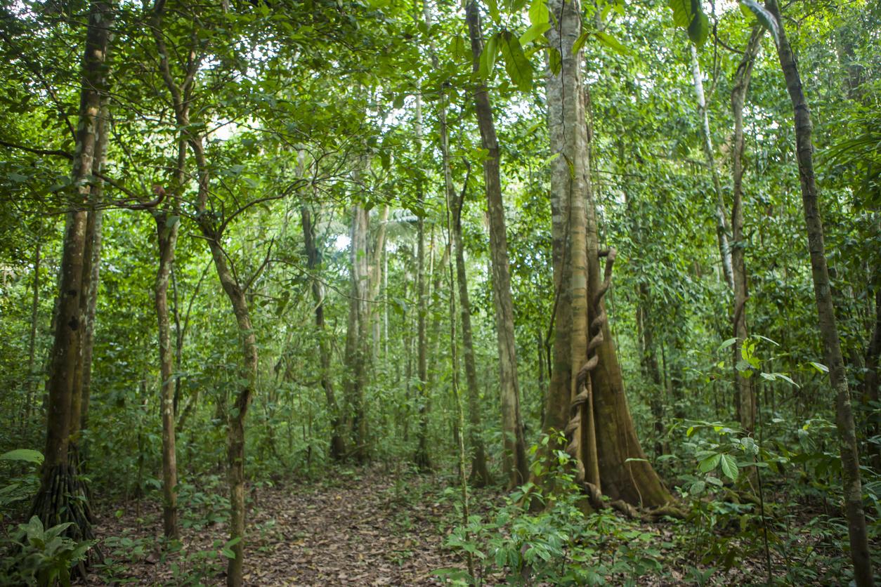 Conheça a reserva no Amazonas que zerou desmatamento e é modelo no país