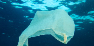 prêmio combate lixo plástico nos oceanos