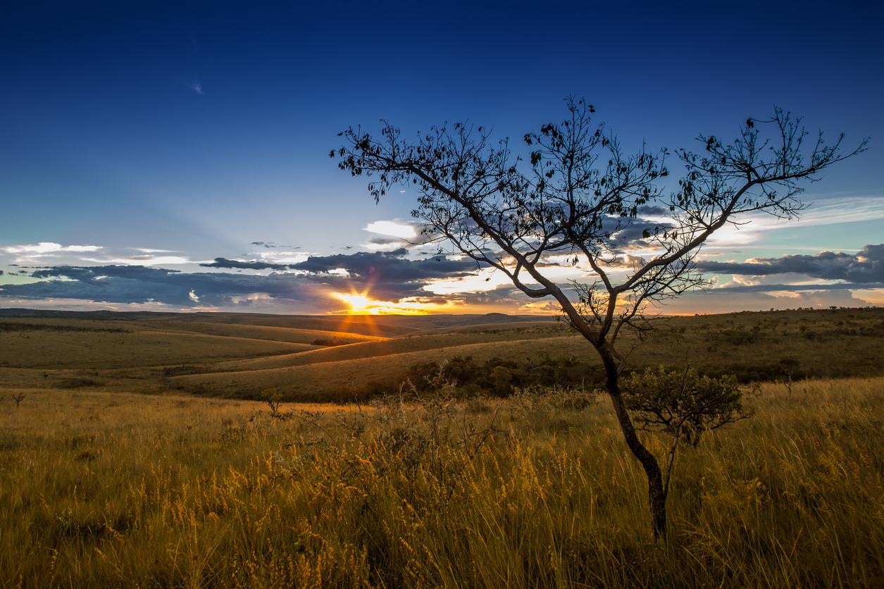 paisagem do Cerrado