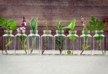 óleos essenciais aromaterapia