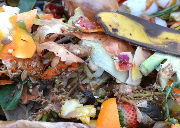 live compostagem