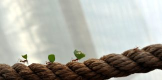 Prêmio Zayed Sustentabilidade
