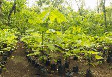 ONGS ambientais reflorestamento
