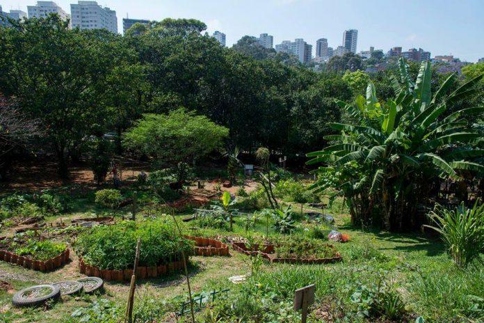 horta permacultura são paulo
