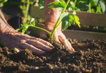 oficina hortas orgânicas sustentáveis