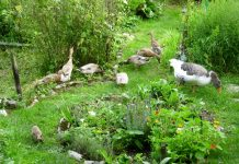 horta permacultural
