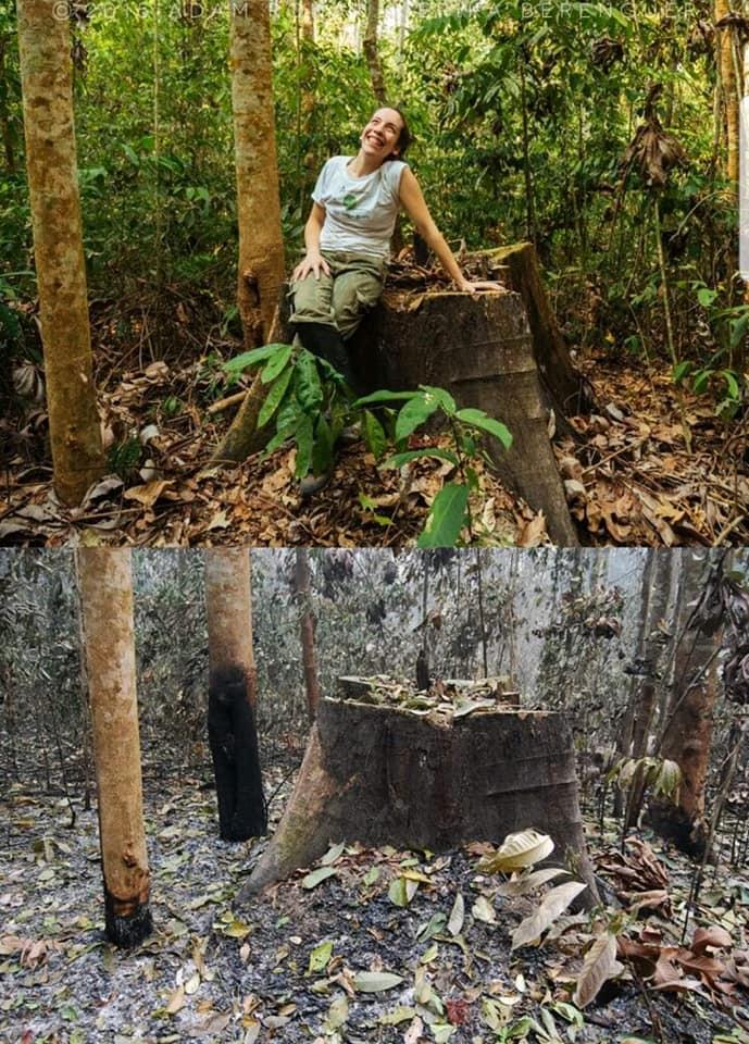 Floresta Amazônica antes e depois do fogo.
