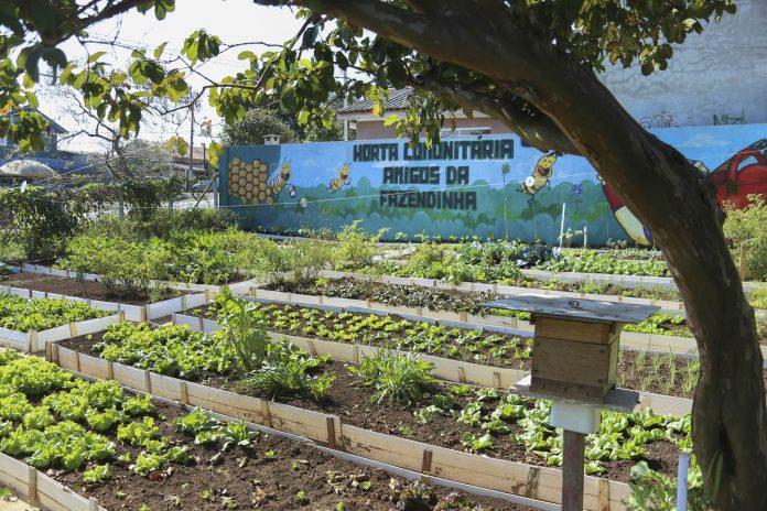 Horta comunitária em Curitiba