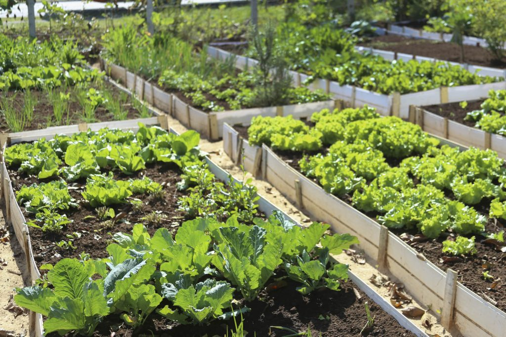 Horta comunitária do Fazendinha em Curitiba