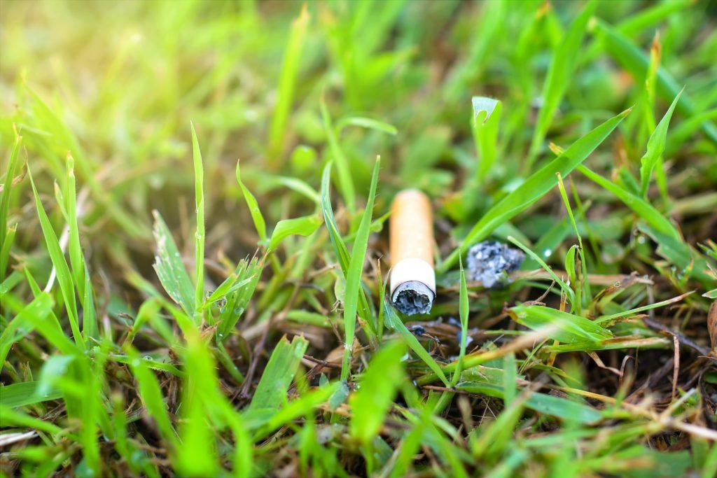 Bituca ou gimba de cigarro jogado em gramado