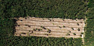 desmatamento abril amazonia