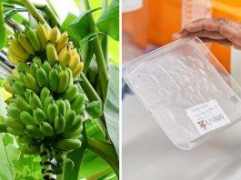 Embalagem de bananeira desenvolvida na UNSW