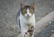 gato na rua