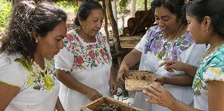 Mulheres maias cultivam abelhas
