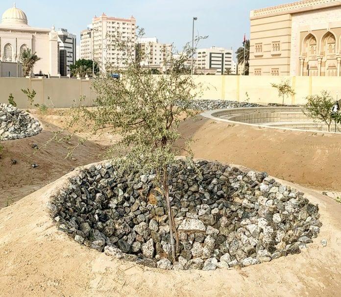 Sharjah clima