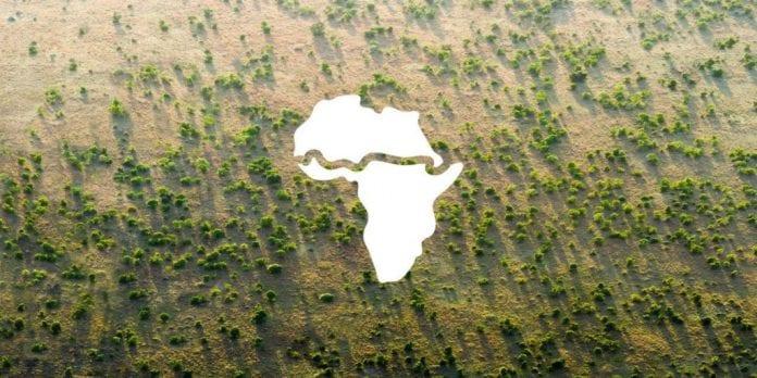 muralha de árvores áfrica