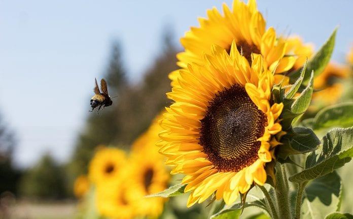 santuário abelhas