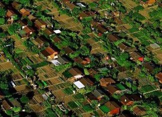 cidade agricultura urbana
