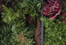 agricultores orgânicos e agroecológicos