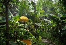 curso agrofloresta