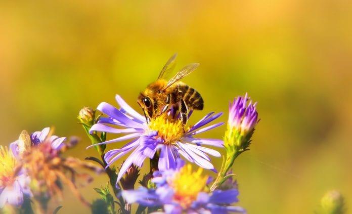 abelhas flores