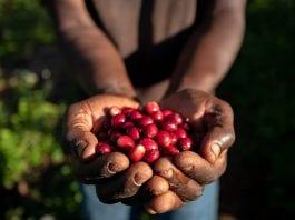 nespresso café sustentabilidade