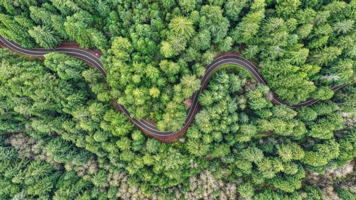 1 trilhão de árvores