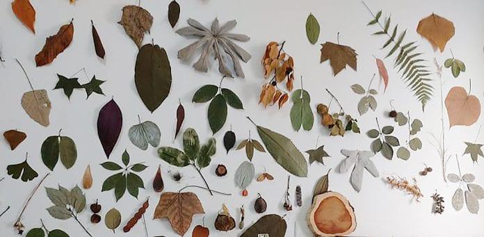 painel de folhas