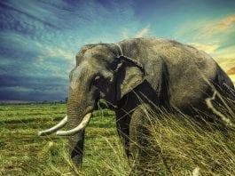 elefantes documentários national geographic