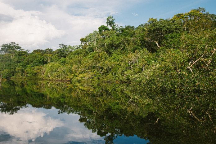 floresta Amazônia
