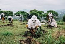 plantio Etiópia
