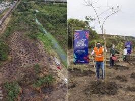 plantio de árvores Curitiba