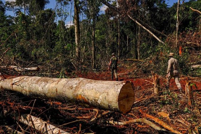 aumento do desmatamento
