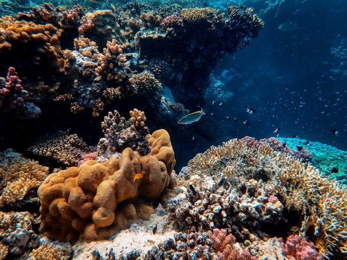 conservação marinha