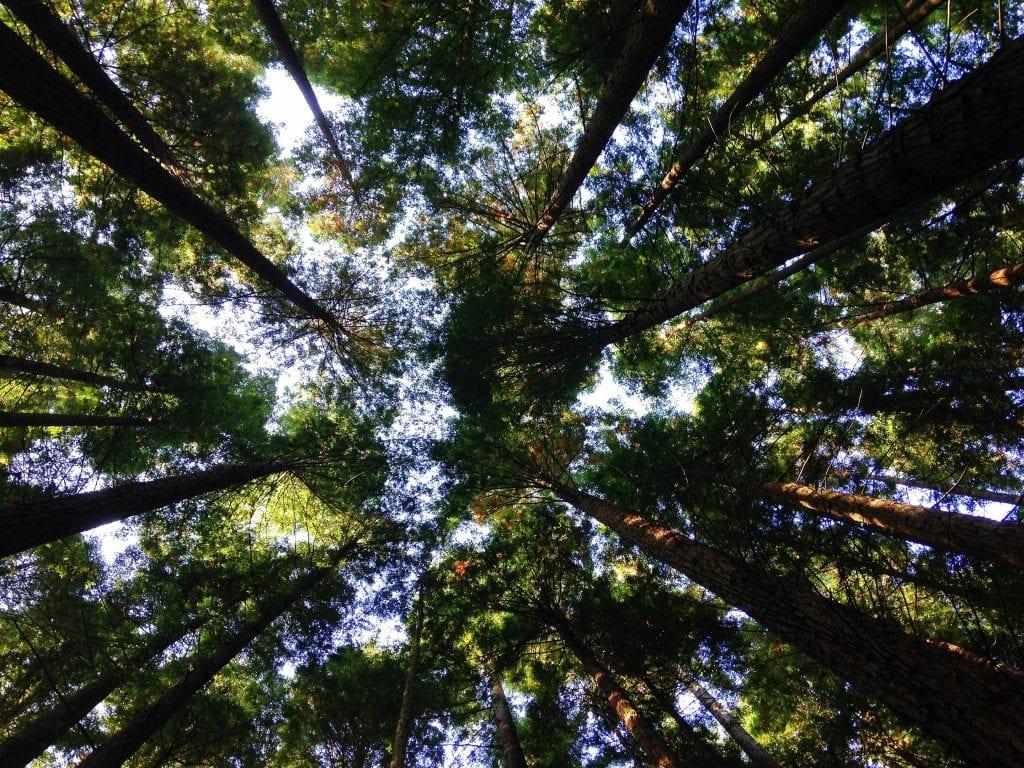 florestas e saúde mental