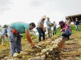 Jornada de Agrofloresta