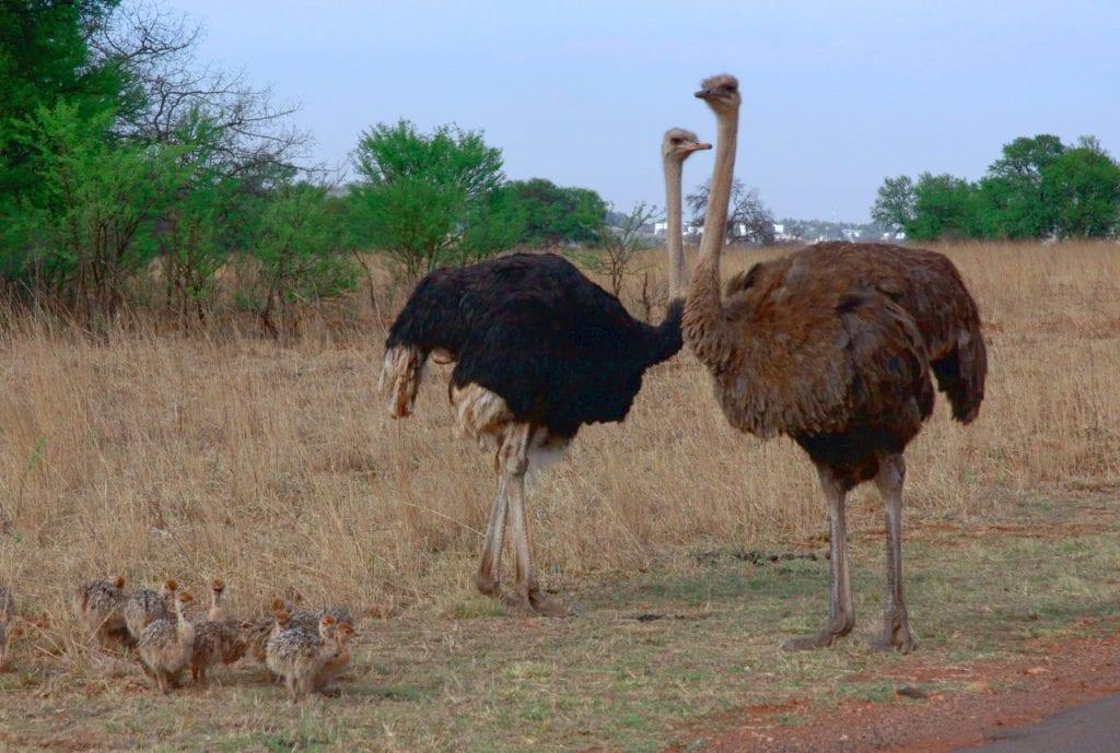 pais animais
