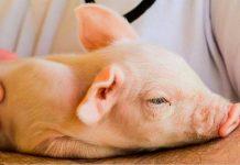 Proteção Animal Mundial bem-estar animal